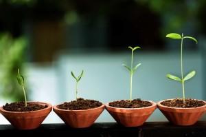 Sucesso com Startups